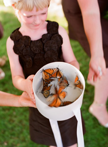live monarch butterfly release