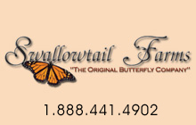 live butterfly releases for weddings, funerals, memorials, and plantable seed paper favors